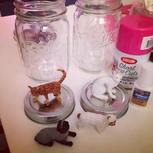 Cats & Jars